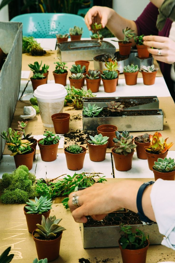 Diy live succulent letter succulents potting soil diy