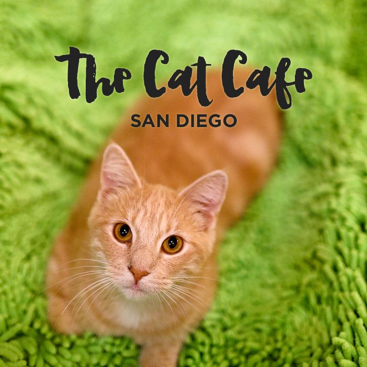 Dating cafe san diego