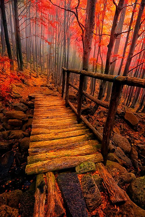 Forest Path, Italy
