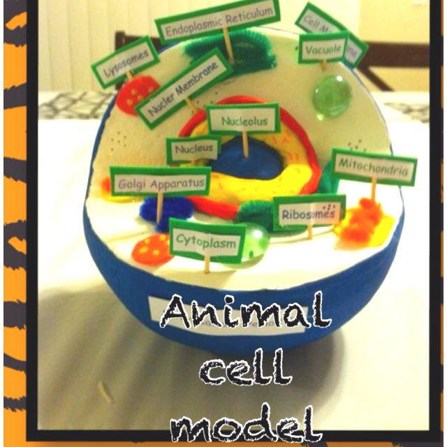 animal cell science project Science activity lesson plan in which students will make a 3-dimensional model of either a plant or an animal cell using common household materials.