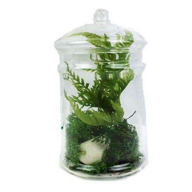 17 meilleures id es propos de terrarium de mousse sur pinterest jardin de mousse terrarium. Black Bedroom Furniture Sets. Home Design Ideas