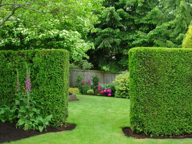 Beautiful summer gardens gardening pinterest hedges for Natural privacy fence