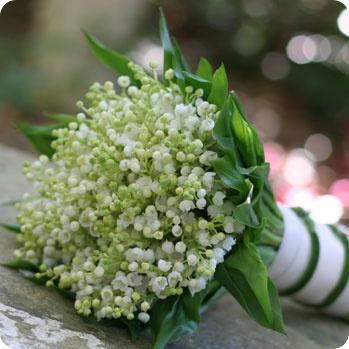 Very beautiful Lily of the Valley bouquet.  Em frança é de tradição oferecer no feriado do 1º de maio ramos de lírios do vale aos amigos e familiares para lhes desejar sorte e felicidade. chamam-se estes ramos Muguet