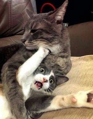La liste ultime des 100 photos de chats les plus adorables de l'Internet tout entier