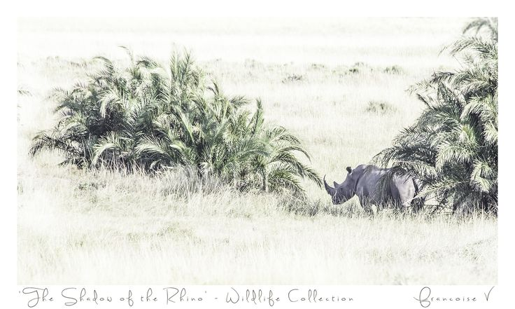 """The Shadow of The Rhino"" {Wildlife Collection} by Francoise V"