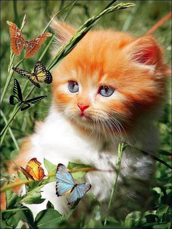 Butterflies and Kitty