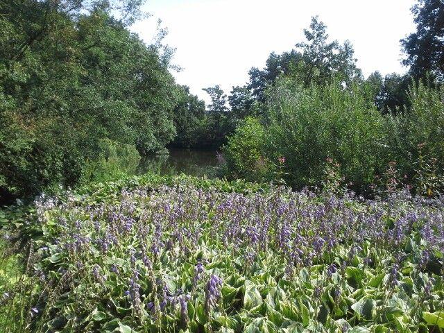 Botanische tuin Utrecht.