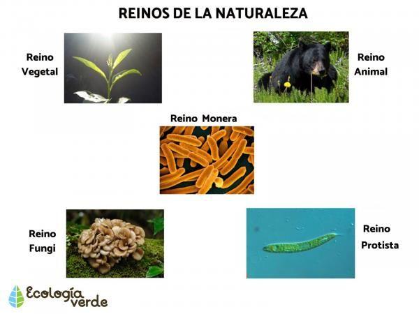 Los Reinos De La Naturaleza Con Imágenes Y Vídeo Animales De La Naturaleza Naturaleza Reino Protista