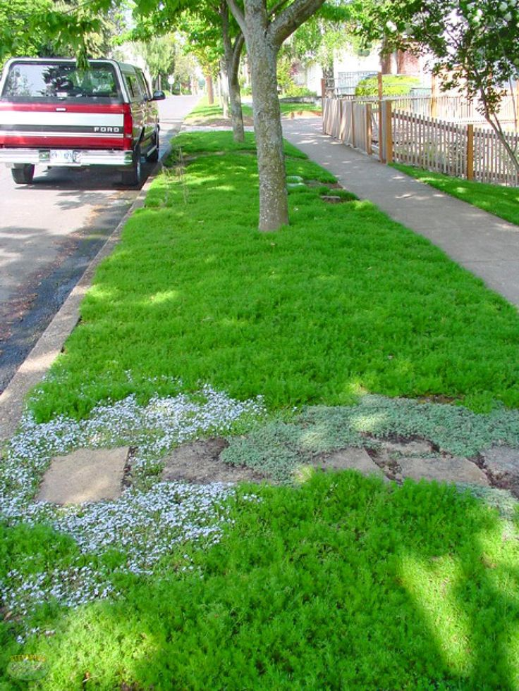 How to Choose Groundcovers and Plants to Use As Lawn Alternatives | DIY Landscaping | Landscape Design & Ideas, Plants, Lawn Care | DIY