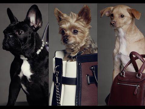 Coach Pups Campaign、セレブの愛犬が続々登場!レディー・ガガ、アリアナ・グランデ、ミランダー・カーのワンちゃんが可愛い! | jibuntsu.com