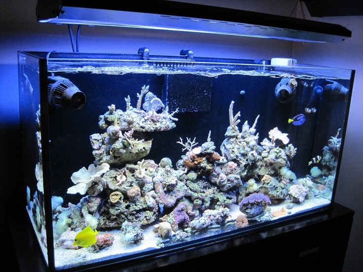 17 best images about akvarium on pinterest octopus for Octopus fish tank
