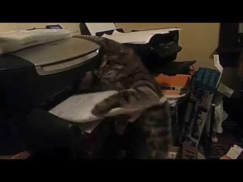 Mai utilizzare la stampante se c'è il tuo gatto nei dintorni!