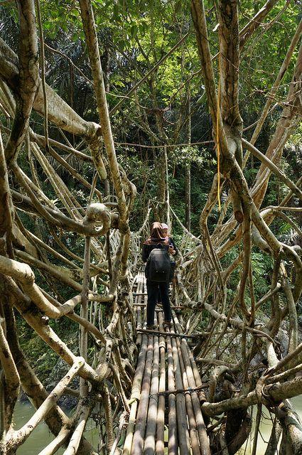 Crossing Jembatan Akar, the living root bridge in West Sumatra / Indonesia