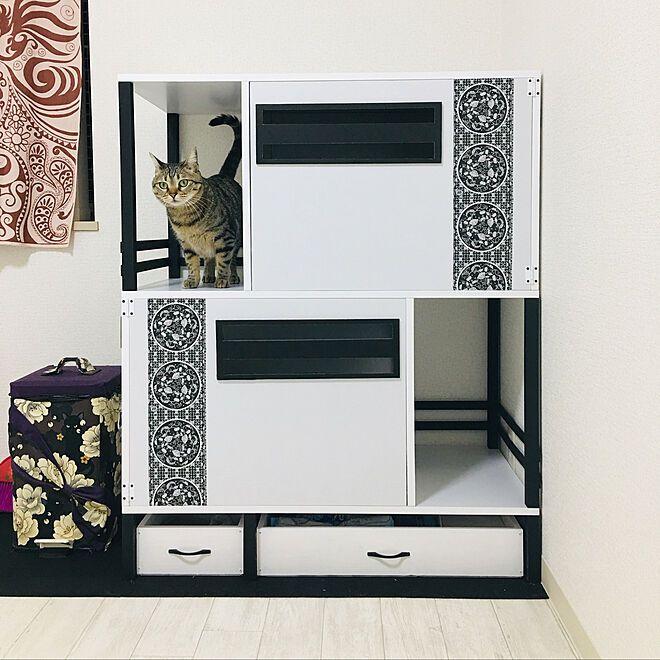 バス トイレ 猫トイレdiy Diy ペットと暮らす家 ねこのいる日常 などのインテリア実例 2018 11 20 16 12 39 Roomclip ルームクリップ インテリア 猫 トイレ セリア インテリア