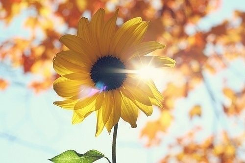 forget roses, give me sunflowers!!!!