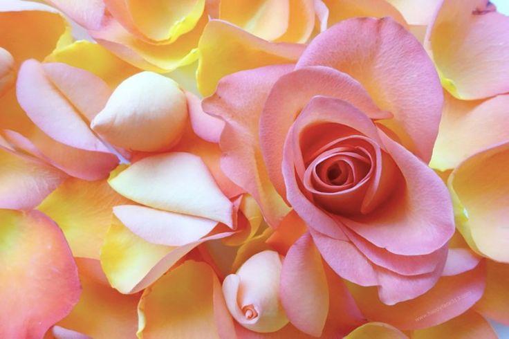 :-) HappyFace313 Rosenblätter Rose petals :-)