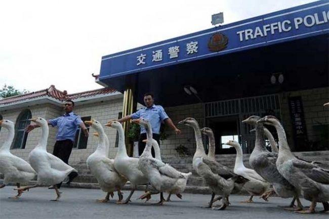 Coisas Bizarras Que Sao Comuns Na China Lugares Ilha De Pascoa
