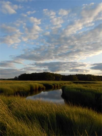Why are our salt marshes falling apart?