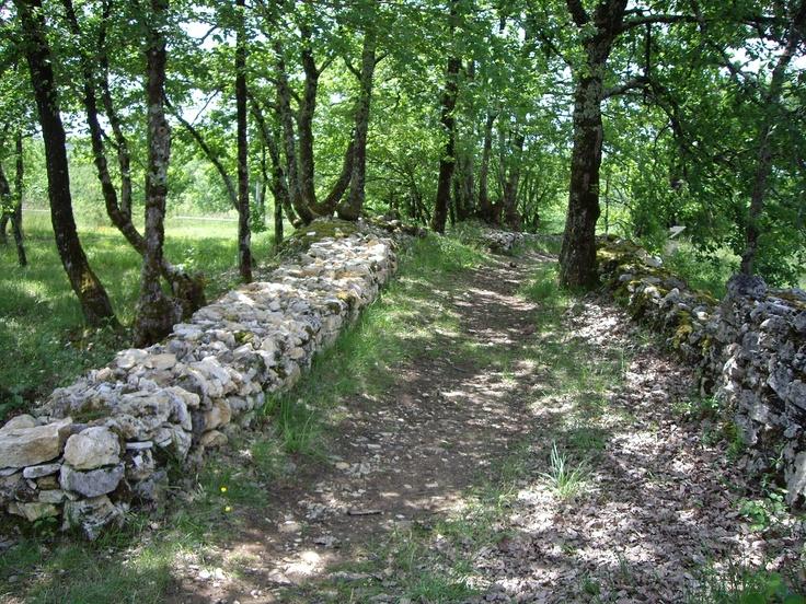 Chemin bordé d'un muret de pierres dans le sentier du vignoble de Domme.