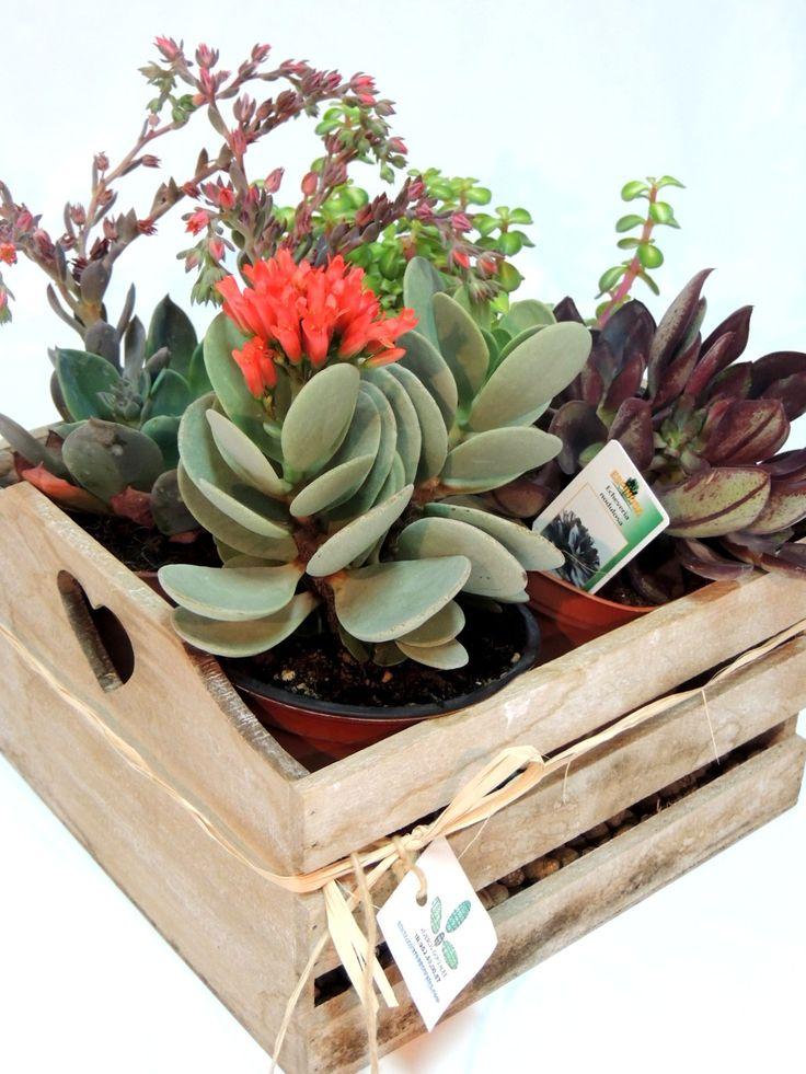 Caja de madera decorada con una selección de suculentas.