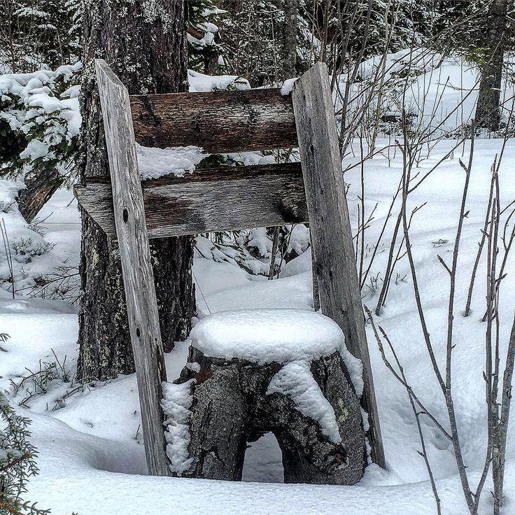 medelpad#sundsvall#bergom#matforsbygden#matfors##besökare#stuga#hus#road#landsbygd#marmen#tuna#tunabygden#långsjön#östralångsjön#sjögräs#vass#vinter#långsjön#lake#jakt#hunt#jakttorn#snopp#penis#kuk# by jessicasupermamsen