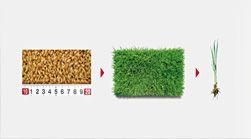 ヤンマーの営農PLUS-密苗のススメをご紹介します。密苗栽培は育苗・田植えの大幅な省力化・低コストか・労力軽減などを実現する技術。今では「密苗」への取り組みが全国各地に広がっています。