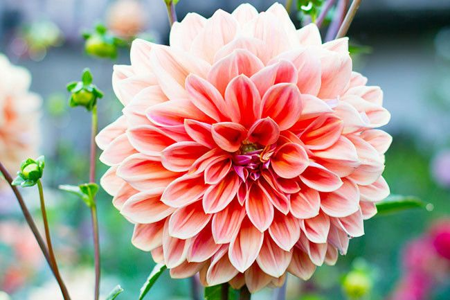 10 best summer flowers image 1
