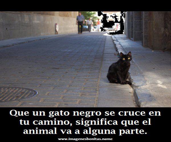 Imagenes Graciosas Para Facebook: Gato Negro