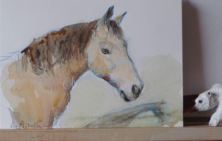 Leo , Connemara pony
