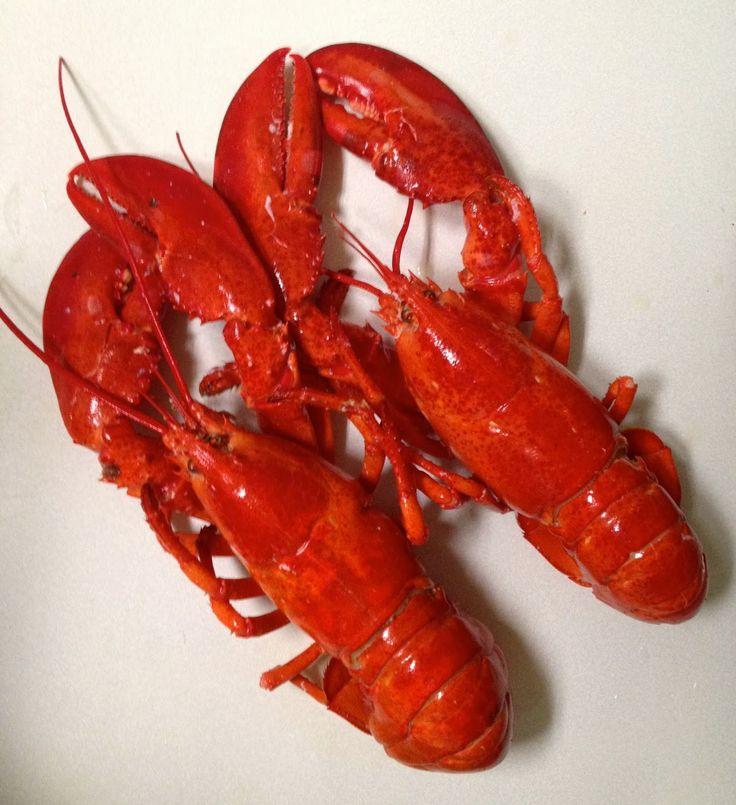Ina Garten Pot Pie lobster pot pies에 관한 pinterest 아이디어 상위 25개 이상