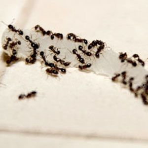 How to Control Household Bugs: You can get rid of ants, moths, and other insect pests without dousing your home with chemicals. | From Organic Gardening