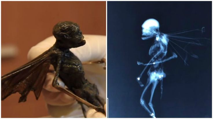What is this creature found in the Mexican desert? Is this a fairy, an alien or a locust from the Book of Revelation?