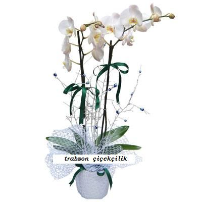 Orkide http://www.trabzonflowers.com/