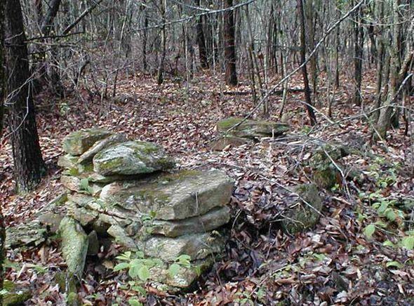 hidden face in the woods