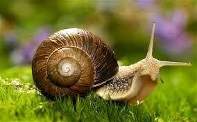 Image result for snail