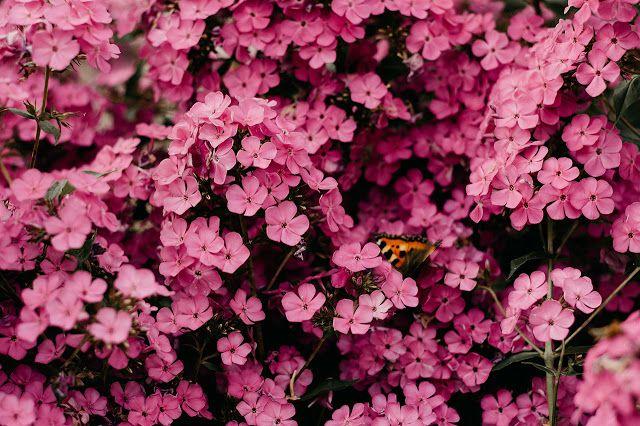 خلفيات ورد صور Close Up Photography Flowers Photography Flower Images