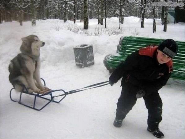 Moon Moon doesn't quite understand dog sledding.