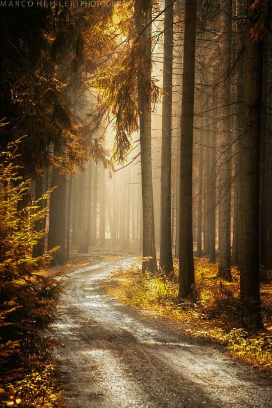 ***Woodland road (Germany) by Marco Heisler cr.af.