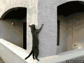 Watch out! here comes the spidercat Cat GIF... | Funny Cat GIFs
