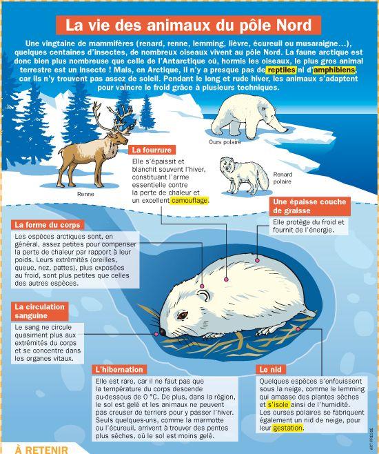 Fiche exposés : La vie des animaux du pôle Nord