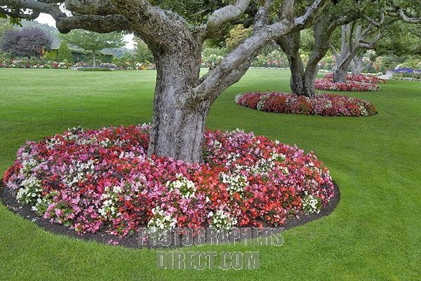 Flowers around trees flowers plants and trees oh my for Plants around trees landscaping