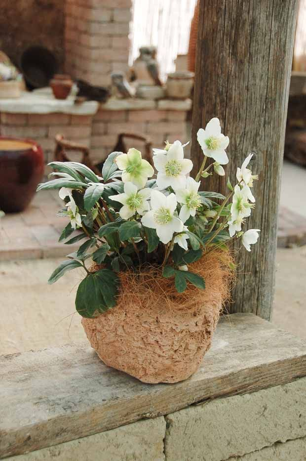 Minivaso Narciso - Idra Arredo Giardino