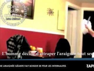 Une araignée géante fait bondir de peur les internautes (Vidéo)