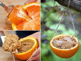 bird feeder, use an orange or grapefruit: Orange, Bird Treat, Craft, Natural Birdfeeders, Bird Feeders, Peanut Butter, Birds, Sunflower Seeds