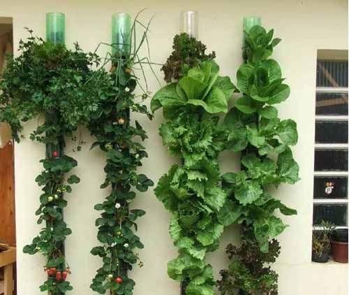 как из пластиковых бутылок сделать вертикальный сад на даче Можно сделать таким образом кухонный садик на даче для выращивания зелени: листья салата, например, всегда будут чистыми.