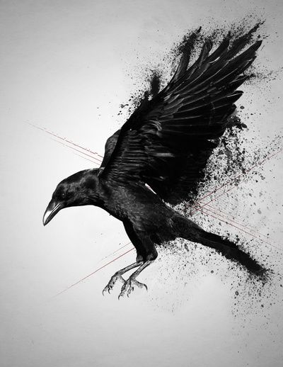 Crow by Adam Flynn                                                                                                                                                     More