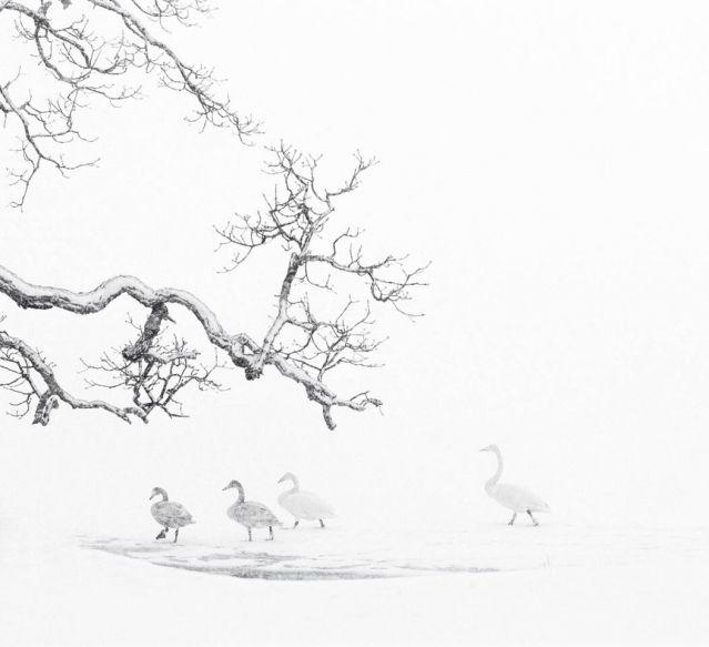 Né en 1976, Vincent Munier a grandi dans les Vosges, au cœur de la nature, auprès d'un père naturaliste ardent défenseur de l'environnement. Le photographe, spécialiste de la vie animale sauvage, est l'invité de Brigitte Patient.