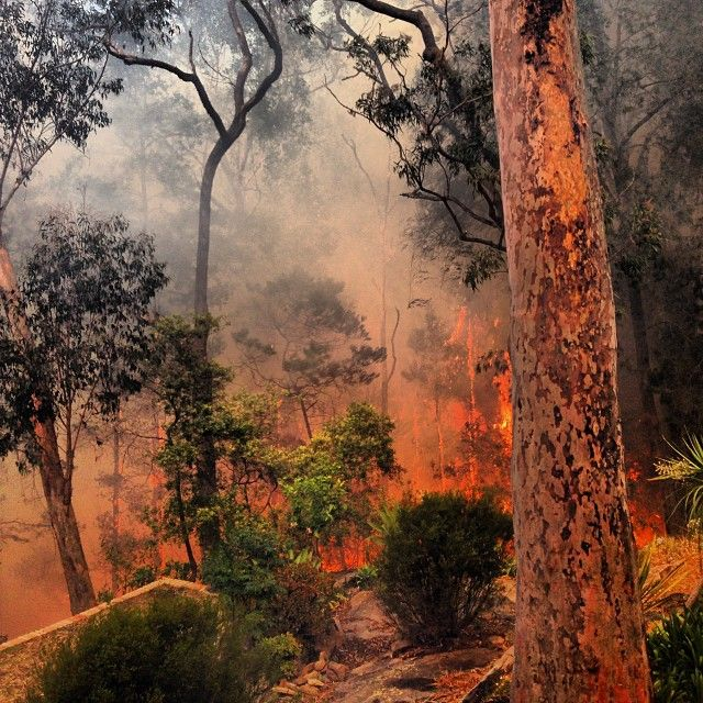 """From """"Scenes of destruction as bushfires continue to burn across New South Wales"""" story by ABC News on Storify — http://storify.com/abcnews/scenes-of-destruction-in-new-south-wales-as-bushfi"""
