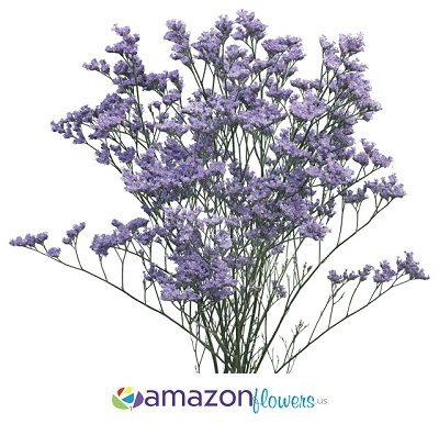 Wholesale Limonium, Bulk Limonium Purple Flowers, Buy Limonium Online & Wholesale Filler Flowers | Amazonflowers.us