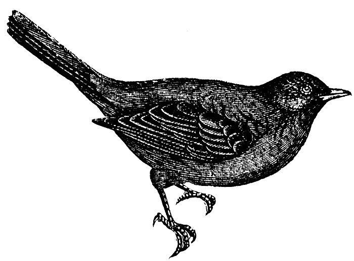 Google Image Result for http://www.nashvillescene.com/imager/blackbird-tattoo-and-gallery-grand-opening/b/original/1201187/276c/5889_3421916.t.gif